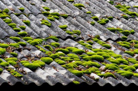 toit avec mousse, produits anti-mousse