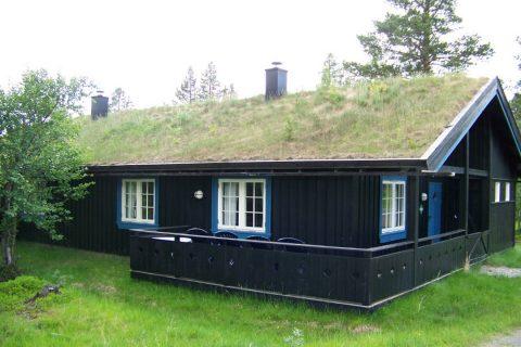 La gouttière en bois sur une toiture végétale