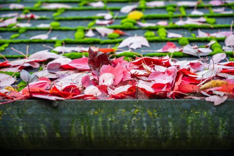feuille dans une gouttière sans par-feuilles