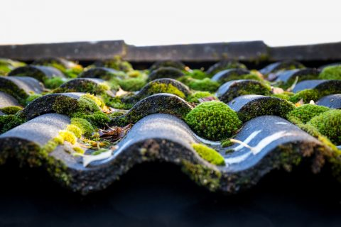 mousse sur un toit utilisation de produits salotuins hydrofuges